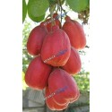 Akee Fruit  - Seso Vegetal (1)