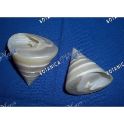 Large Mother of Pearl  Seashell