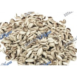 Opened Cowry Shells -bag 100 pieces